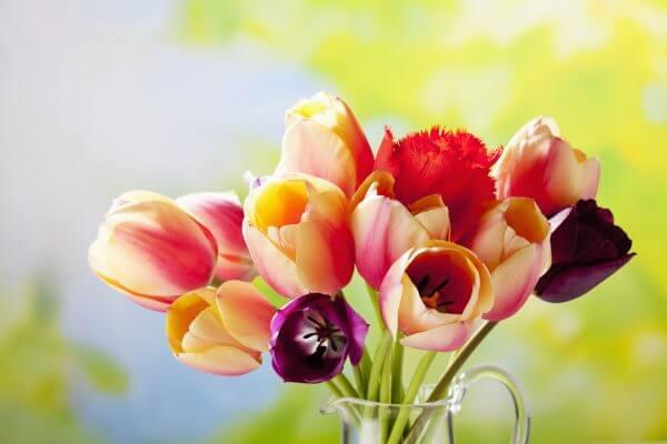 Bouquet of Tulips – Designer Splashback