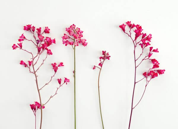 Blossom - Designer Splashbacks