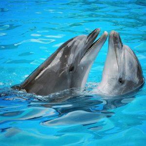 Dolphins – Designer Splashback