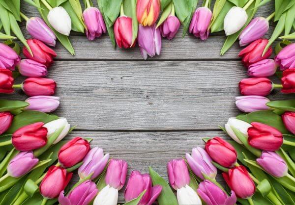 Love Heart of Tulips - Designer Splashback