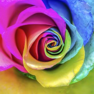 Rainbow Rose – Designer Splashback