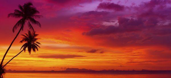 Sunset With Tropical Palm Trees – Designer Splashback
