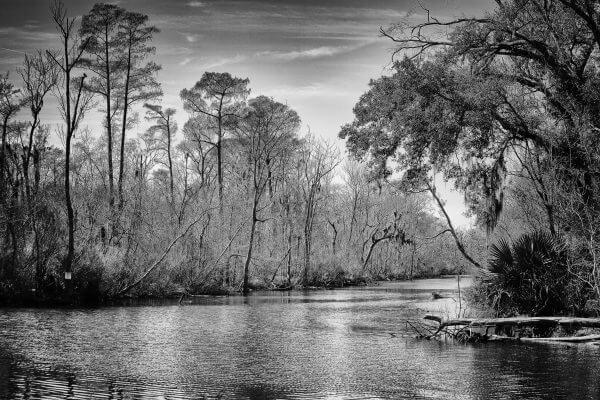 Swamp Black and White - Designer Splashback