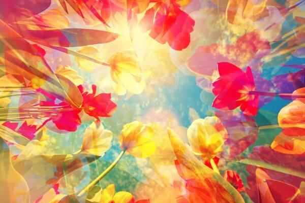 Abstract Flowers - Designer Splashbacks