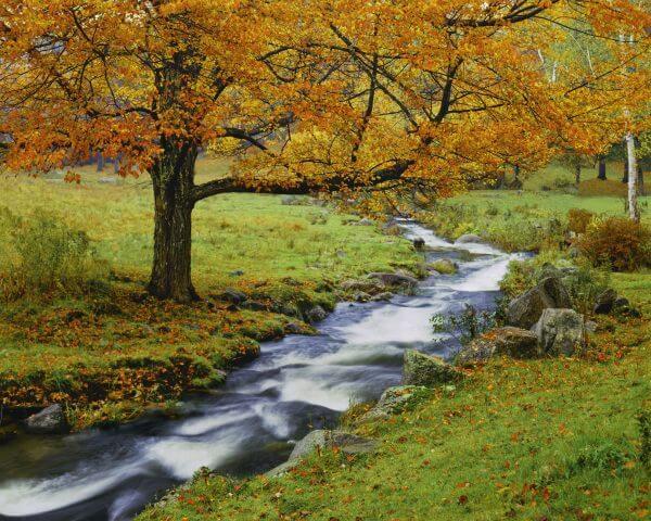 Autumn in Vermont - Designer Splashbacks