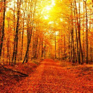 Autumn Path - Designer Splashbacks