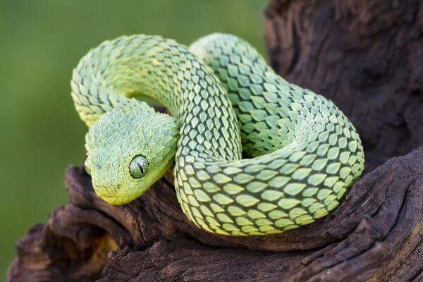 Colourful Snake - Designer Splashbacks
