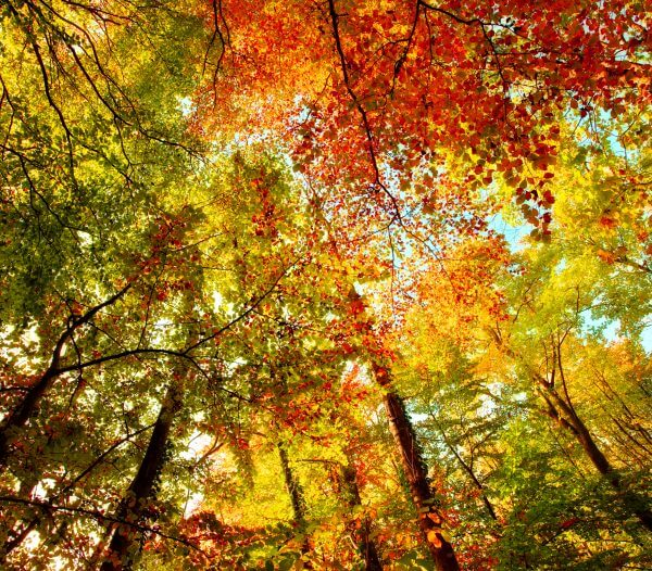 Colourful Tree Tops