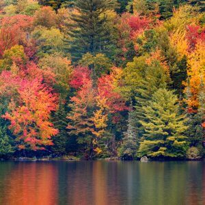New England Autumn Foliage - Designer Splashbacks