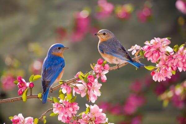 Birds on a Branch - Designer Splashbacks