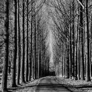 Tree Lined Road Black and White - Designer Splashbacks