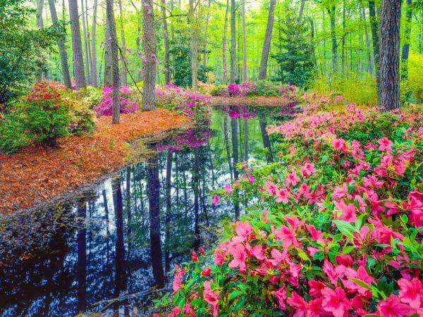 Woodland in Spring - Designer Splashbacks